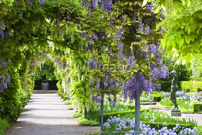 Switzerland, Zurich, Belvoir Park, arbour of wisteria