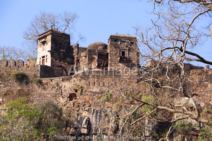 India, Rajasthan, Ranthambore. Ranthambore Fort stands majestically atop a hill, overlooking the reserve.