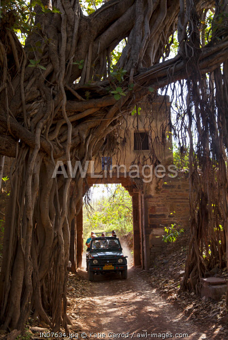 India, Rajasthan, Ranthambore. Tourists on safari in Ranthambore National Park.