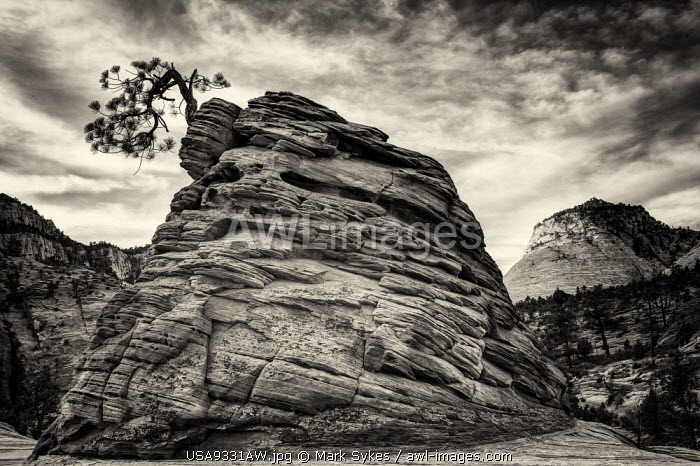 U.S.A., Utah, Zion National Park