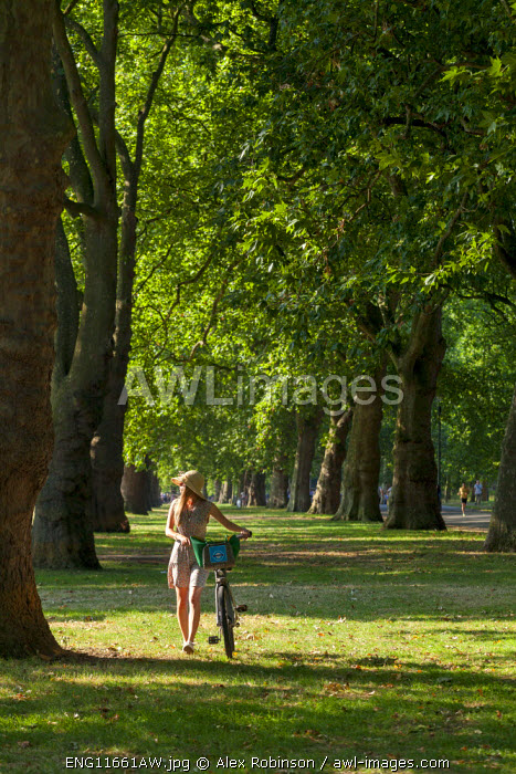 Europe, United Kingdom, England, London, Hyde Park, an attractive young woman walking with hire bicycle MR