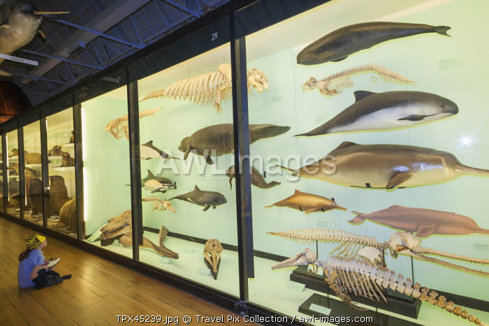 England, Hertfordshire, Tring, The Natural History Museum, Exhibit of Sea Creatures