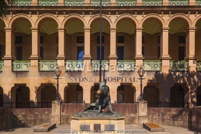 Australia, New South Wales, NSW, Sydney, Sydney Hospital, statue of the boar Il Porcellino