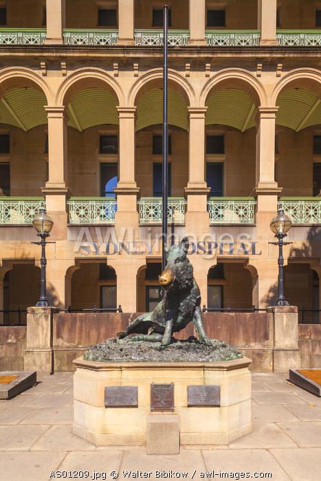 Australia, New South Wales, NSW, Sydney, Sydney Hospital, statue of the boar Il Porcellino