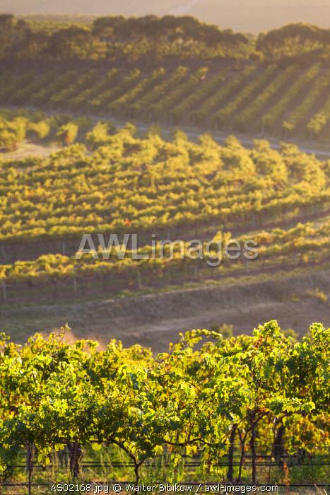 Australia, South Australia, Fleurieu Peninsula, McLaren Vale Wine Region, McLaren Vale, elevated vineyard view