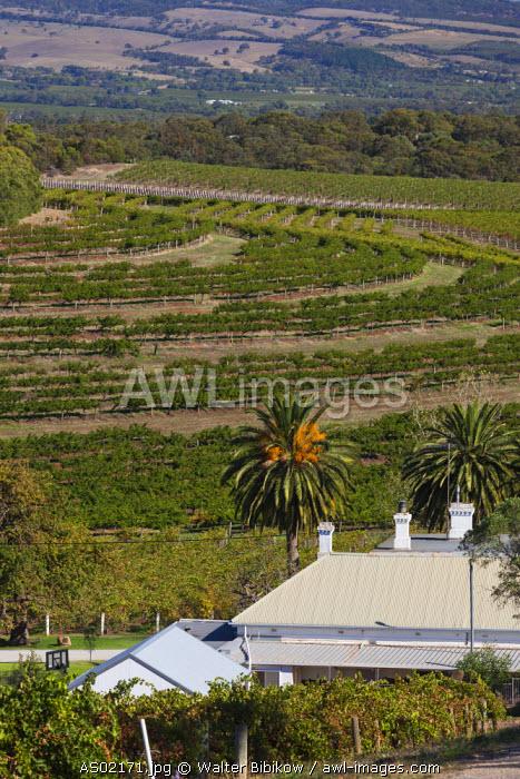 Australia, South Australia, Fleurieu Peninsula, McLaren Vale Wine Region, McLaren Vale, Rosemount Estate Winery, elevated view, late afternoon