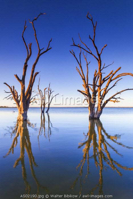 Australia, South Australia, Murray River Valley, Barmera, Lake Bonney, petrified trees, sunset