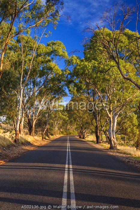 Australia, South Australia, Barossa Valley, Tanunda, country road, Mengler's Hill