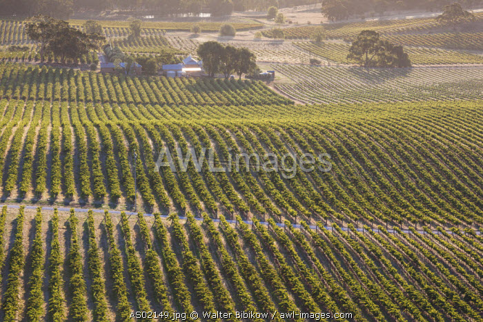 Australia, South Australia, Clare Valley, Clare, elevated view of vineyards from Quarry Hill, late afternoon