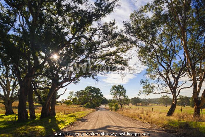 Australia, South Australia, Barossa Valley, Mount Pleasant, country road