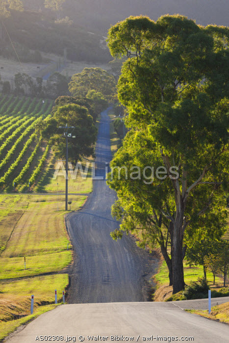 Australia, Victoria, VIC, Yarra Valley, country road