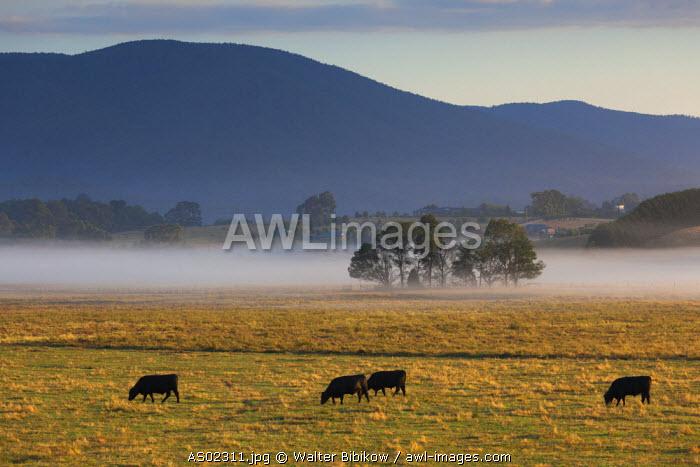 Australia, Victoria, VIC, Yarra Valley, Helaesville, field with fog, dawn
