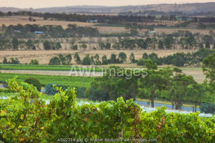Australia, Victoria, VIC, Yarra Valley, vineyard