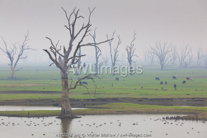 Australia, Victoria, VIC, Huon, landscape by Lake Hume with forest fire smoke