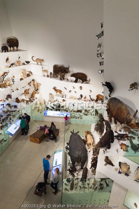 Australia, Victoria, VIC, Melbourne, Carlton, Melbourne Museum, biology and natural history exibit