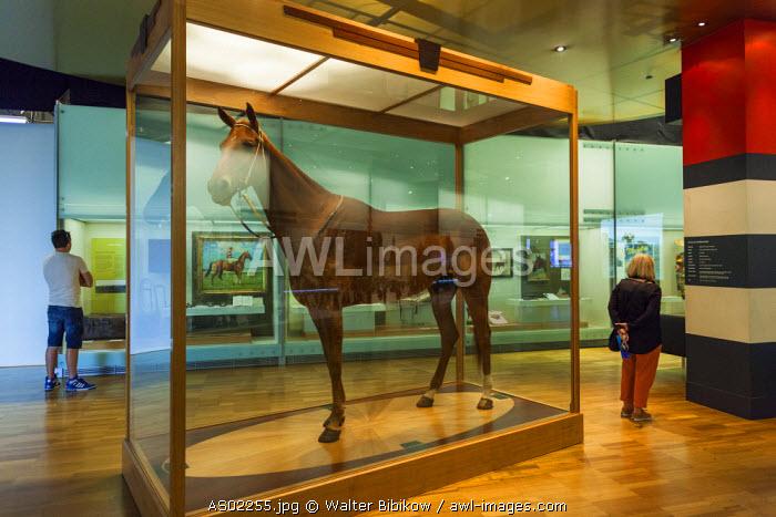 Australia, Victoria, VIC, Melbourne, Carlton, Melbourne Museum, Phar Lap, famous Australian racing horse
