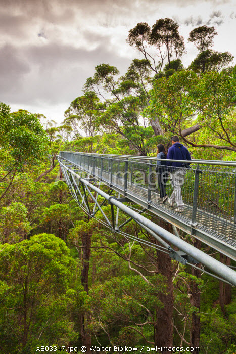 Australia, Western Australia, The Southwest, Walpole-Nornalup, Valley of the Giants Tree Top Walk, walkway above giant tingle trees