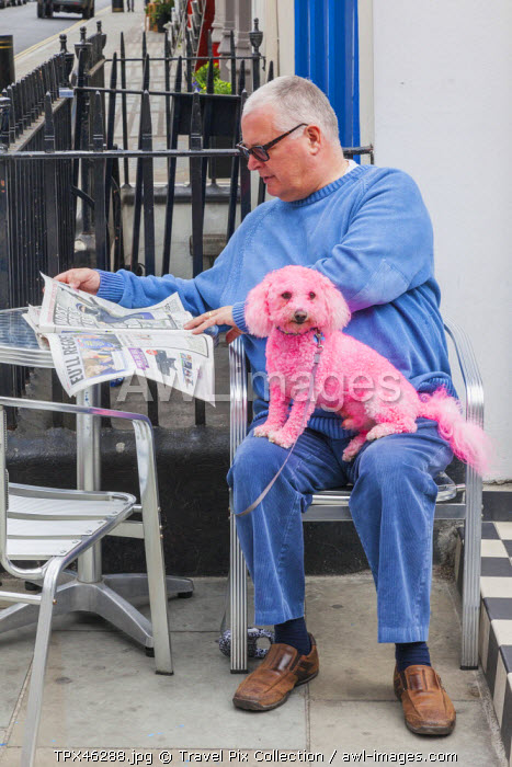 England, London, The Annual Gay Pride Parade, Parade Participant with Pink Poodle