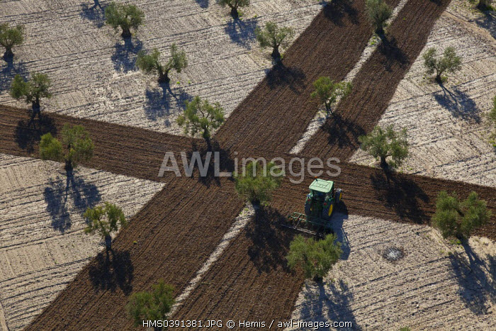 Spain, Community of Madrid, Villaconejos, olive groves (aerial view)