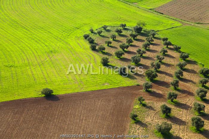Spain, Community of Madrid, Chinchon, crops (aerial view)