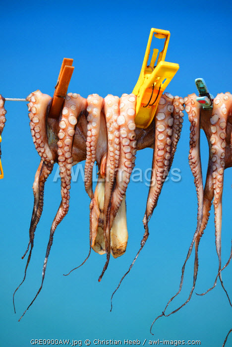 Octopus drying in the sun, Plaka, Crete, Greece, Europe