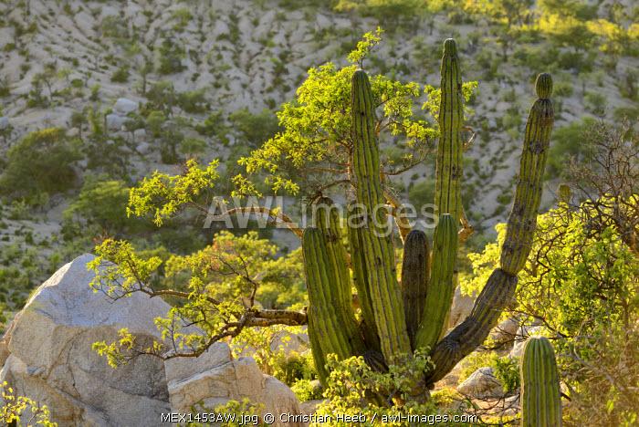 Desert Mountains outside of the city of La Paz, Baja California Sur, Mexico,