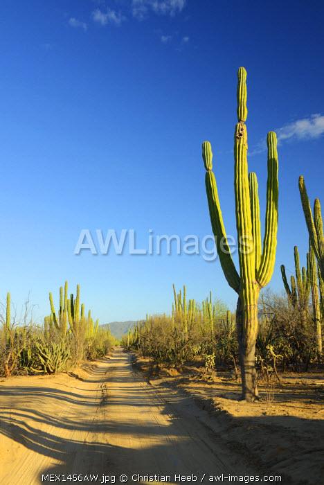 Desert outside of La Ventanaz, Baja California, Mexico
