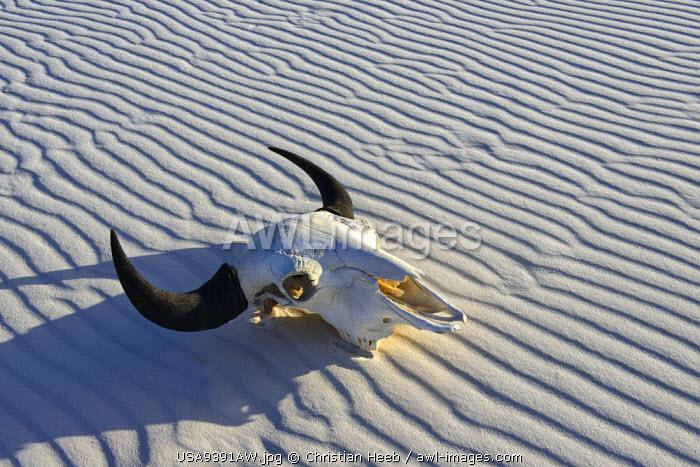 Bison Skull in sand desert, White Sands, National Monument, New Mexico, USA