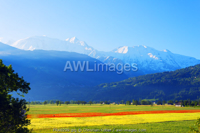 Europe, France, Haute Savoie, Rhone Alps, Poppy field and Mont Blanc 4810m