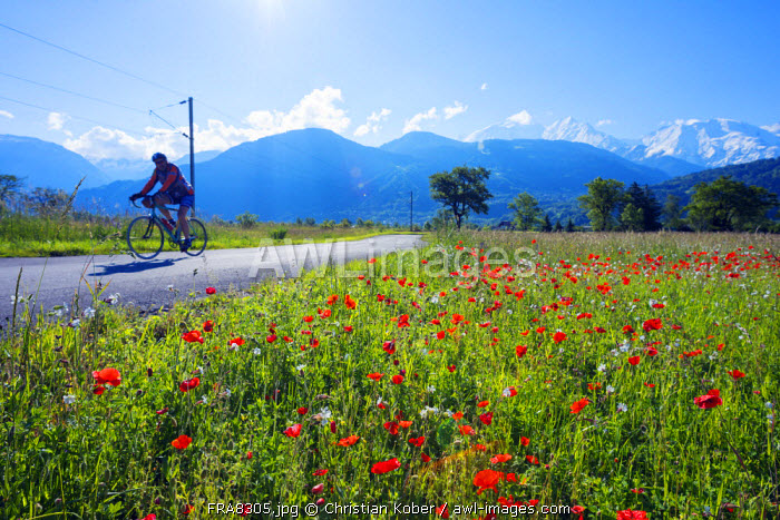 Europe, France, Haute Savoie, Rhone Alps, Poppy field