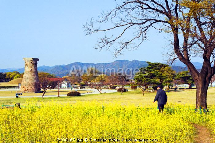 Asia, Republic of Korea, South Korea, Gyeongsangbuk-do, Gyeongju, Cheomseongdae Astronomical Observation Tower, spring rapeseed blossom, Royal Tombs burial mounds