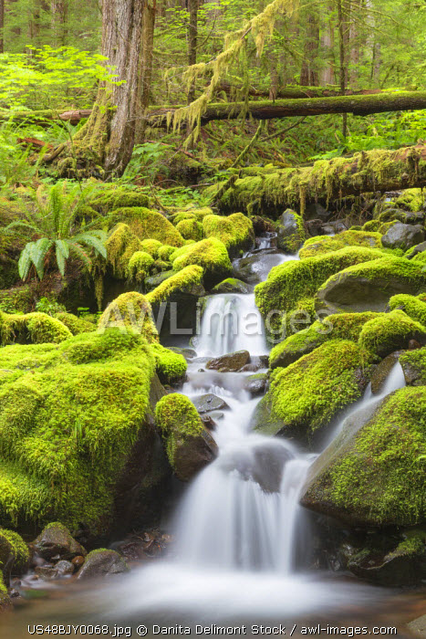 awl-images.com - USA / USA, Washington, Olympic National Park. Small stream in forest