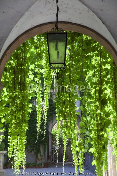 Hanging plant in alcove, Ascoli Piceno, Le Marche, Italy