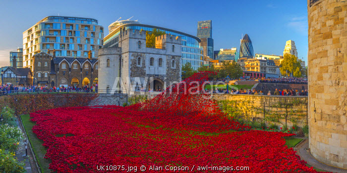 England, London, Tower of London, Blood Swept Lands and Seas of Red by ceramic artist Paul Cummins, with setting by stage designer Tom Piper, 888,246 ceramic poppies marking one hundred years since the first full day of Britain's involvement in the First World War