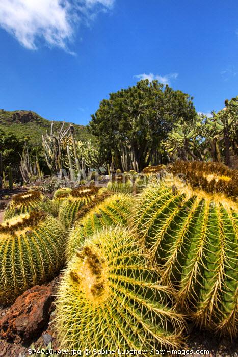Cactus garden, Jardin Canario, Tafira, Gran Canaria, Canary Islands, Spain