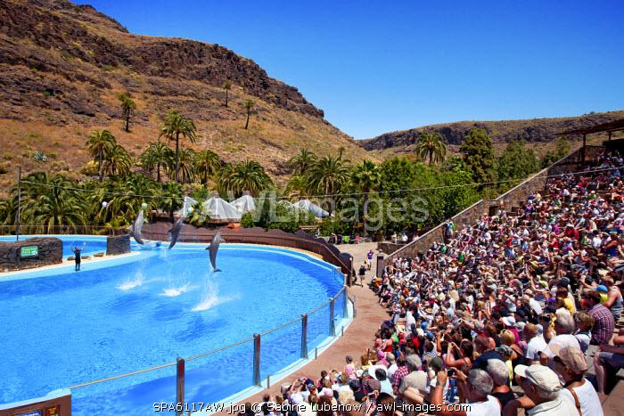 Dolphin show, Palmitos Park, Maspalomas, Gran Canaria, Canary Islands, Spain