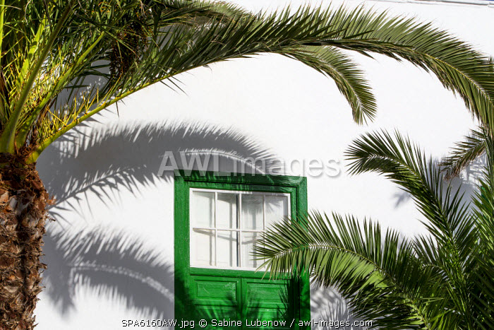 Palm tree and green window, Lanzarote, Canary Islands, Spain
