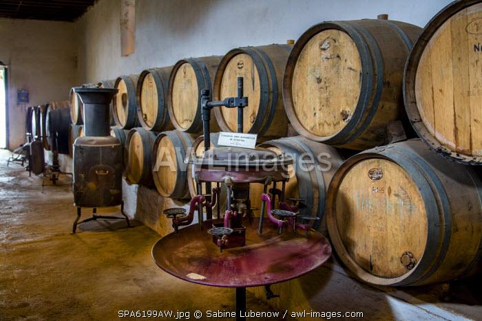 Wine barrels, wine museum El Grifo, wine region La Geria, Lanzarote, Canary Islands, Spain