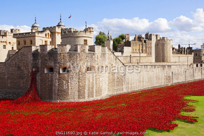 UK, England, London. Blood Swept Lands and Seas of Red, a major art installation at the Tower of London, marking one hundred years since the first full day of Britain's involvement in the First World War.