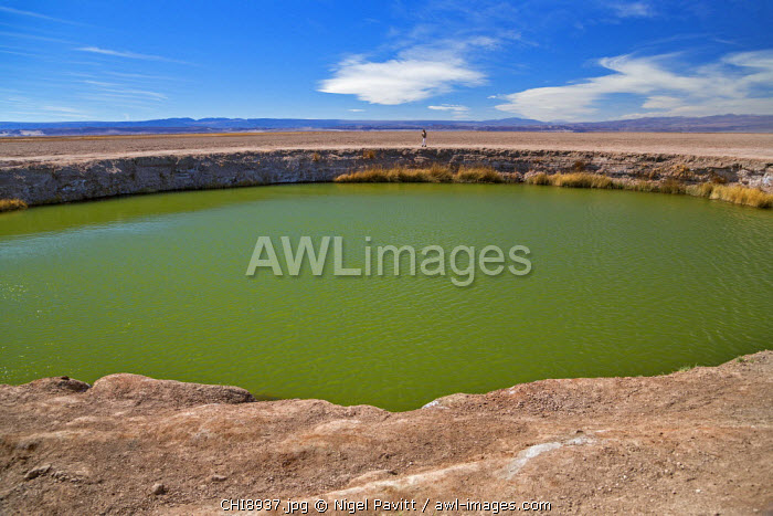 Chile, Atacama Desert, Salar de Atacama, Antofagasta Region, El Loa Province. A large green-water sinkhole in the salt flats of the Atacama Desert.