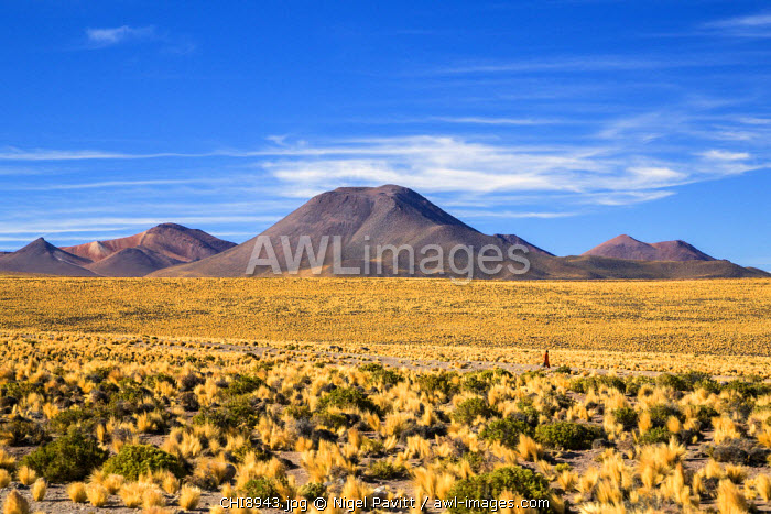 Chile, Atacama Desert, Altiplano, Antofagasta Region, El Loa Province. The striking scenery of the Altiplano where scrub vegetation provides sustenance for animals.