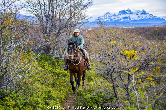 Chile, Torres del Paine, Magallanes Province. A Gaucho riding along a trail through the Patagonian steppe in the Torres del Paine National Park.