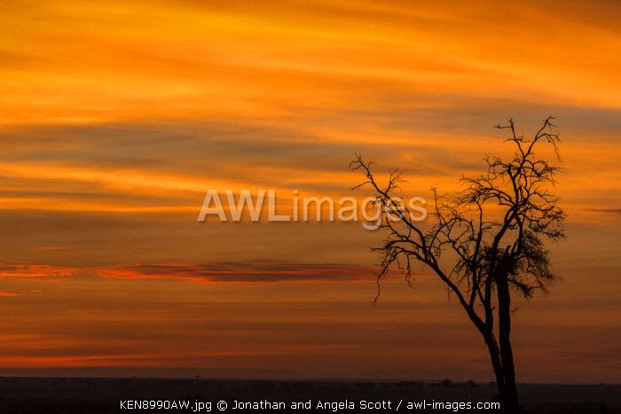 Africa, Kenya, Masai Mara, Narok County. Sunset over the Savannah landscape