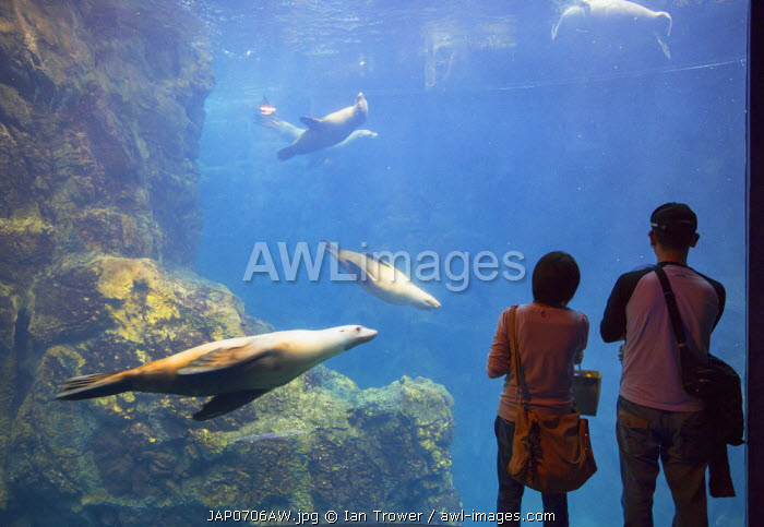 Couple watching seals at Osaka Aquarium, Tempozan, Osaka, Kansai, Japan