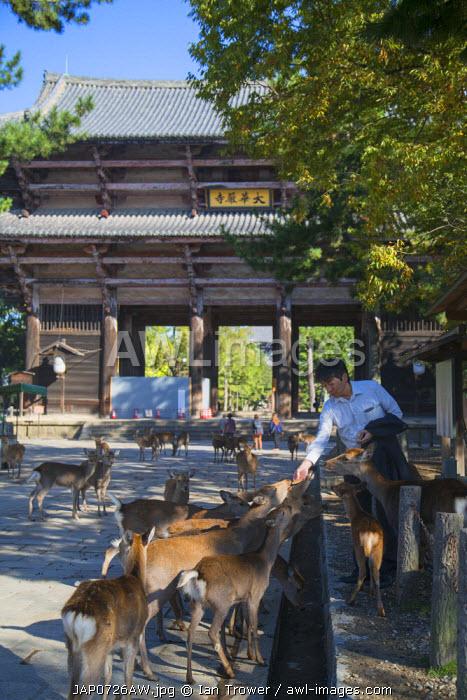Man feeding deer outside Nandaimon Gate of Todaiji Temple (UNESCO World Heritage Site), Nara, Kansai, Japan