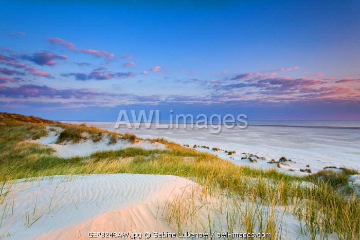 Dunes at dusk, Amrum Island, Northern Frisia, Schleswig-Holstein, Germany