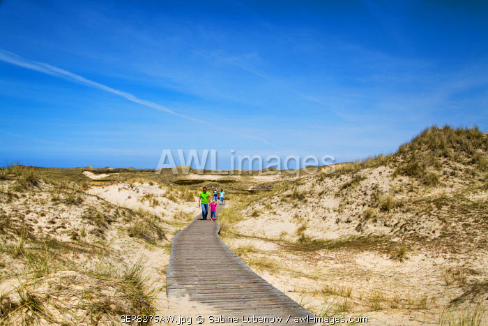 Walker in the dunes, Amrum Island, Northern Frisia, Schleswig-Holstein, Germany