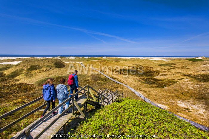 Walker in the dunes, Amrum Island, Northern Frisia, Schleswig-Holstein, Germany