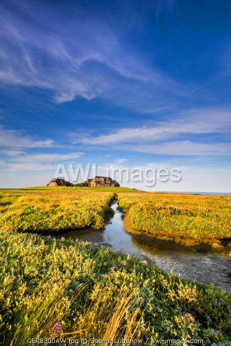 House on a wharf, Hallig Langeness, Northern Frisia, Schleswig-Holstein, Germany