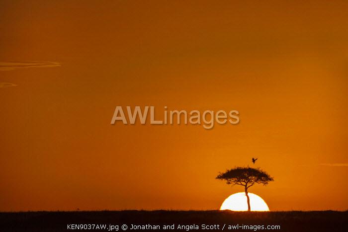 Africa, Kenya, Narok County, Masai Mara National Reserve. Sunset on the plains.
